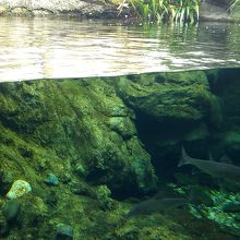 川魚の生態を楽しく学べる
