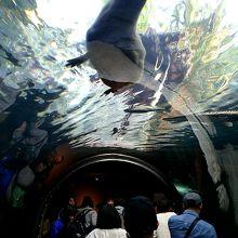 360度のトンネル