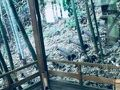 箱根「四季の湯座敷」武蔵野別館 写真