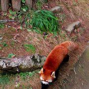 日本一小さな動物園