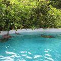 写真:ニューカレドニア ラグーン水族館