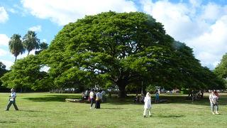 見慣れた木がこんなところに・・・