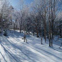 志賀高原タンネの森オコジョスキー場