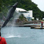 くじらの博物館その1 3頭のクジラショーその1
