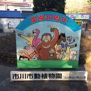 子供連れで行くほのぼのとした動物園