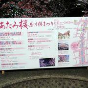 冬の終わりの熱海1泊 あたみ桜 糸川桜まつりの夜桜