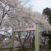雲南市桜まつり (木次)