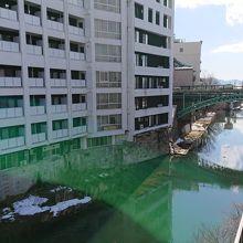足元の川には鴨がいっぱい