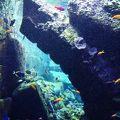 ザ ロスト チェンバーズ水族館