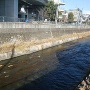 冬場は水の汚れが少ないかな