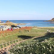 きれいな海と水仙の景色がすばらしい