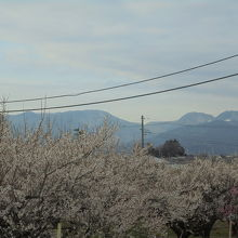 この日は富士山が見えず
