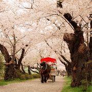 ちょうど桜が見頃でラッキー♪