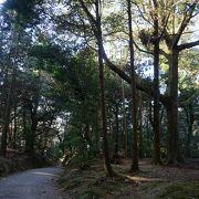 両側から空を覆うようにそびえる大木の風景がちょっと続きます