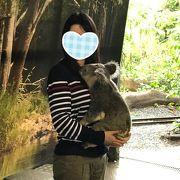 コアラと写真