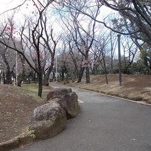 桜は3月末です。