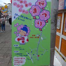 三浦海岸駅を下車すると桜まつりの看板が出ています