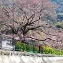山科疏水 (琵琶湖疏水)