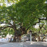 阿波の國の一之宮 大麻比古神社の境内のご神木 楠の大木は県内屈指のパワースポット