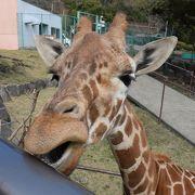 動物が間近に!大満足の動物園!