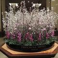 ロビー中央の花 エレベーター内のバラ1輪
