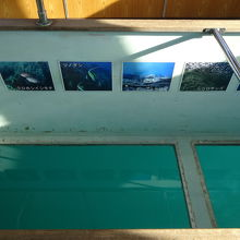 竜串グラスボート