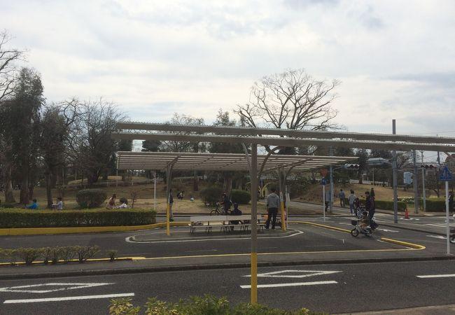 ユーカリ 交通 公園