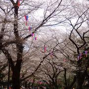江戸から続くお花見名所 桜は見頃です