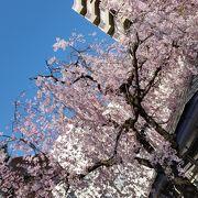 桜とスカイツリーのコラボ