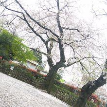 花吹雪広場