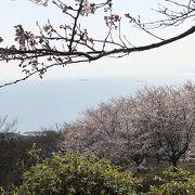 山道は桜のトンネルで海も見えます