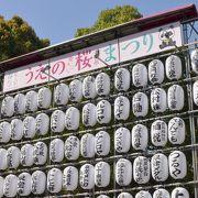 桜は上野だけに咲くのではない