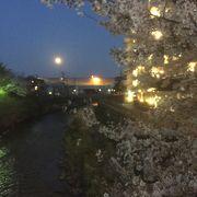 和田町駅前の桜が綺麗でした