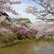 津駅近くの桜の名所