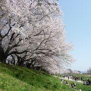 京都府NO.1人気のお花見スポットです!