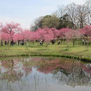 花桃を鑑賞しました