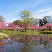 春のお花見は桜だけじゃない☆桃の名所!古河桃まつりアクセス方法