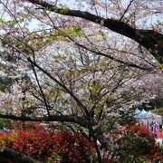 江戸時代から続く桜の名所の公園