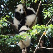 パンダの聖地