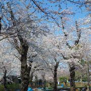 家族連れの多い桜の名所