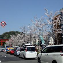 桜のシーズンがおススメ