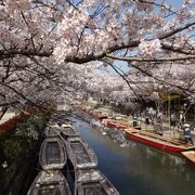 天気もよく、桜も柳もきれいで最高に良い川下りだった。