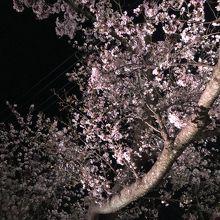 どの枝も満開でした