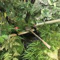 写真:退蔵院の水琴窟