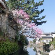 春うらら、満開の桜や柳並木を愛でて50分