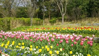 春の時期に訪問