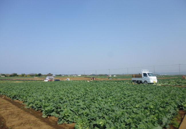 三浦市農業協同組合
