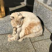 実は猫を見に行った