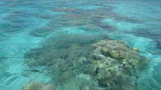池間島海底観光