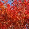 紅葉の見事なお寺さんです。